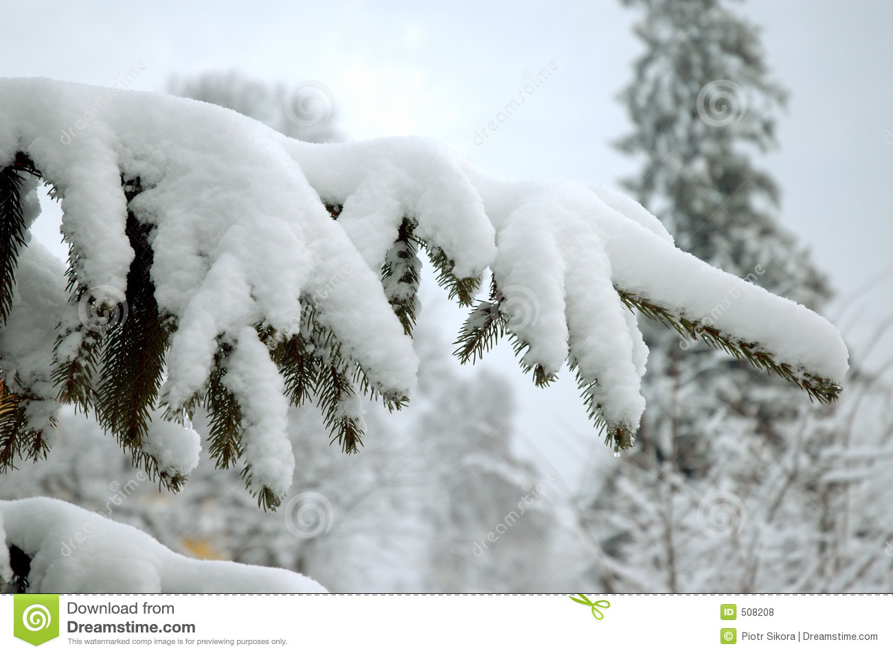 snowy forest white tree branches winter themed snowy tree branch stock photo image of fresh 255