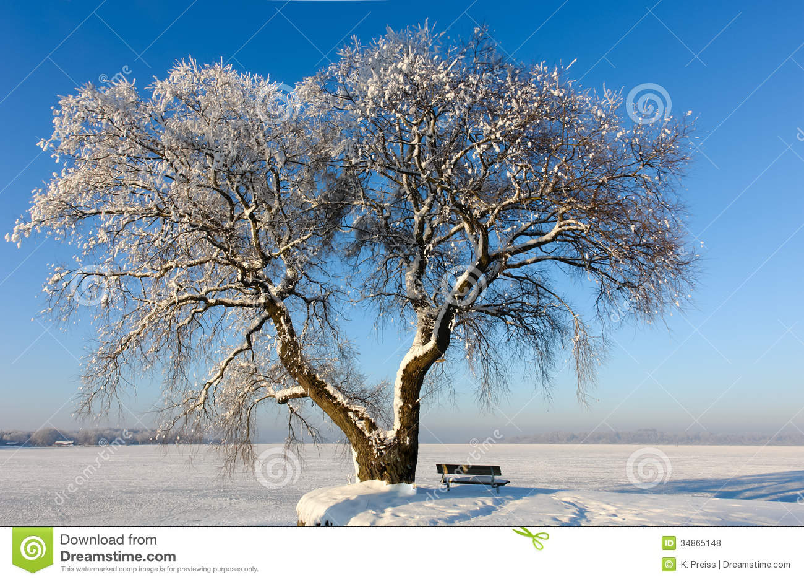 Snowy Tree on Frozen Lake II