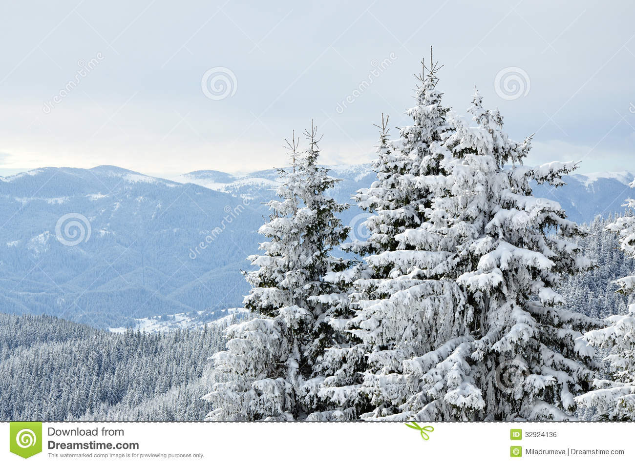 Snowy Trees Royalty Free Stock Image - Image: 32924136