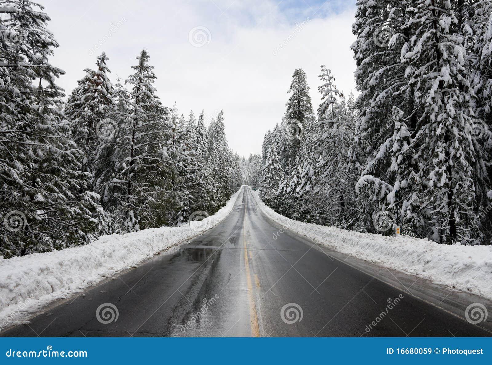 Snowy-Wald