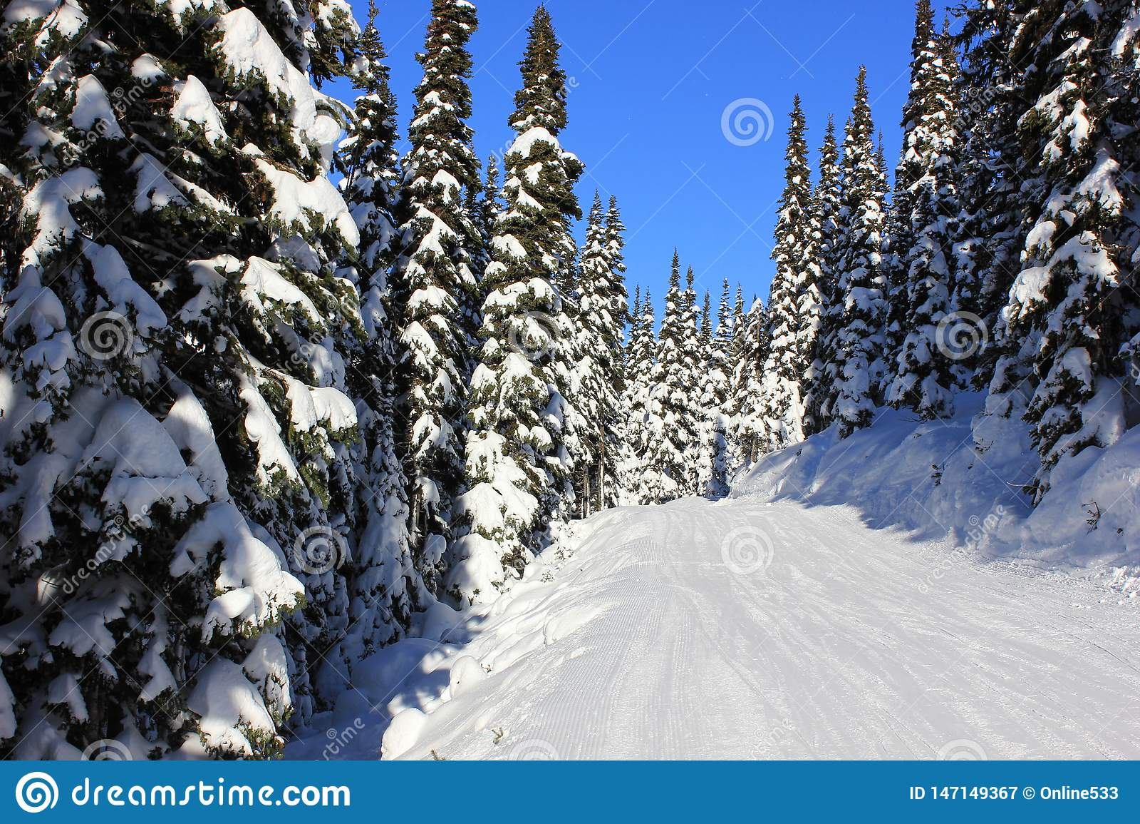 Snowy-Wald im Winter an einem sonnigen Tag