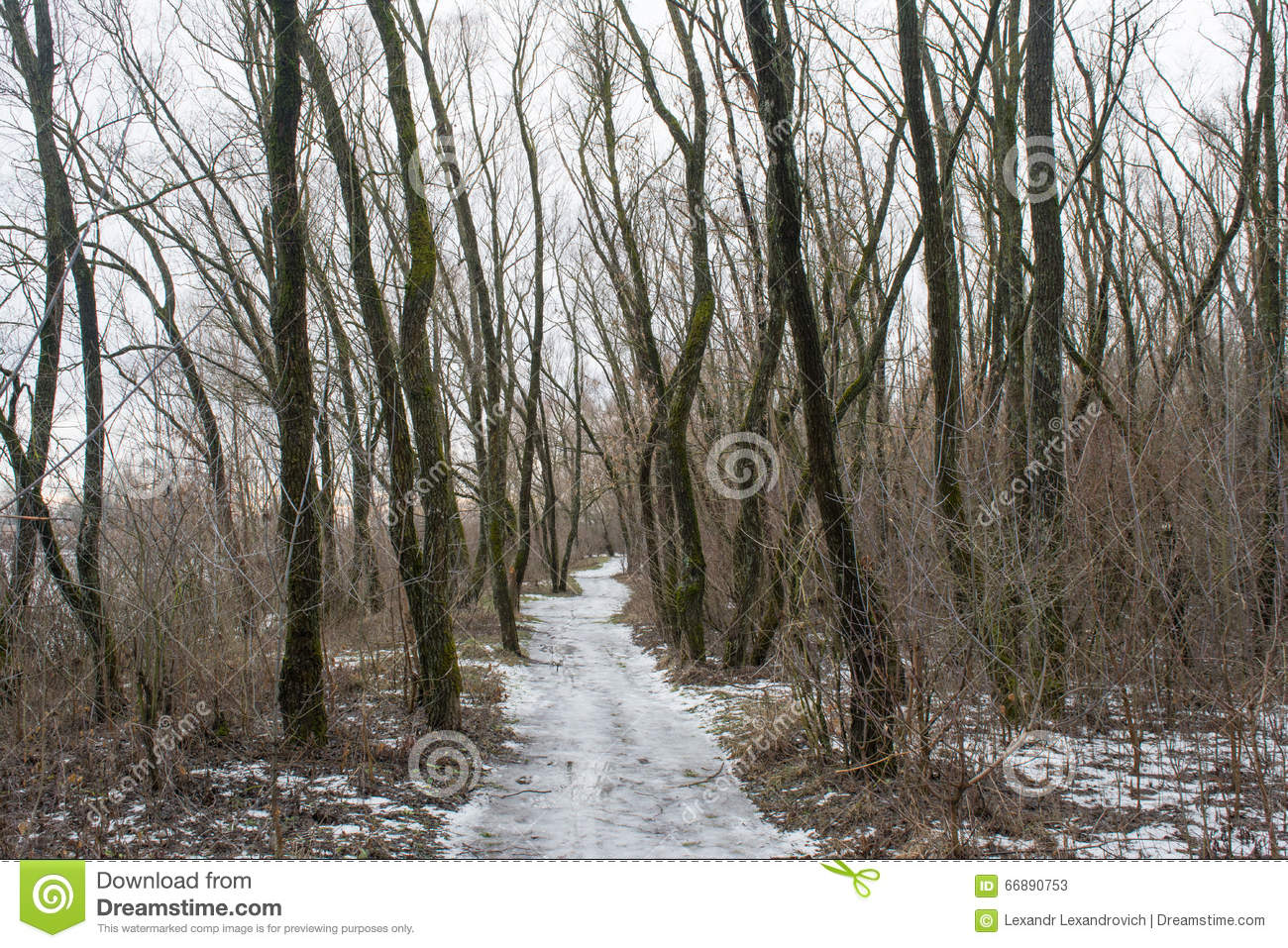 snowy way between trees in the dark winter forest stock image