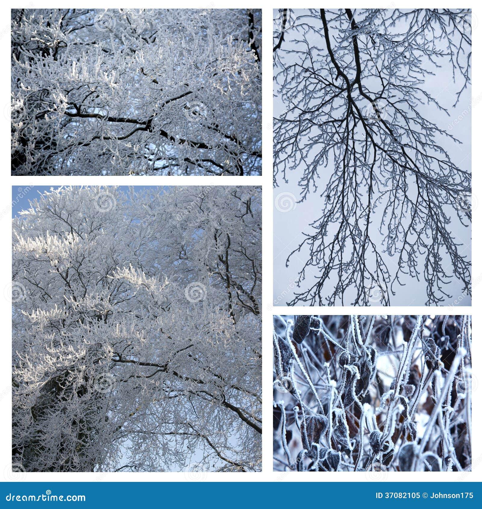 Download Snowy White tło obraz stock. Obraz złożonej z liść, światło - 37082105
