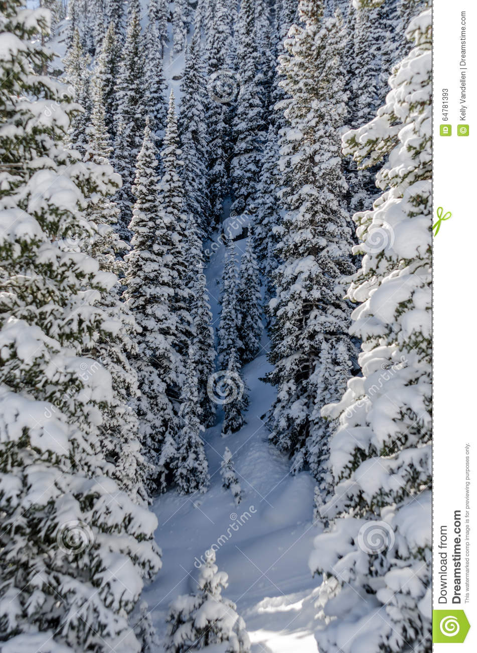snowy forest white tree branches winter themed snowy winter stock photo image 64781393 255