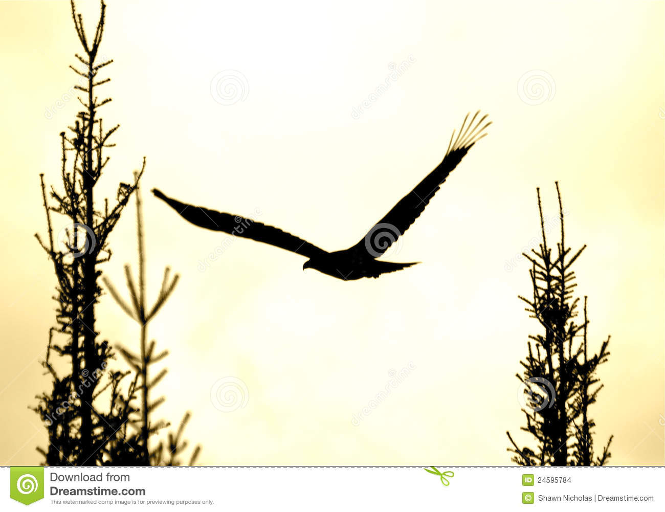 Soaring Eagle Silhouette Stock Images - Image: 24595784