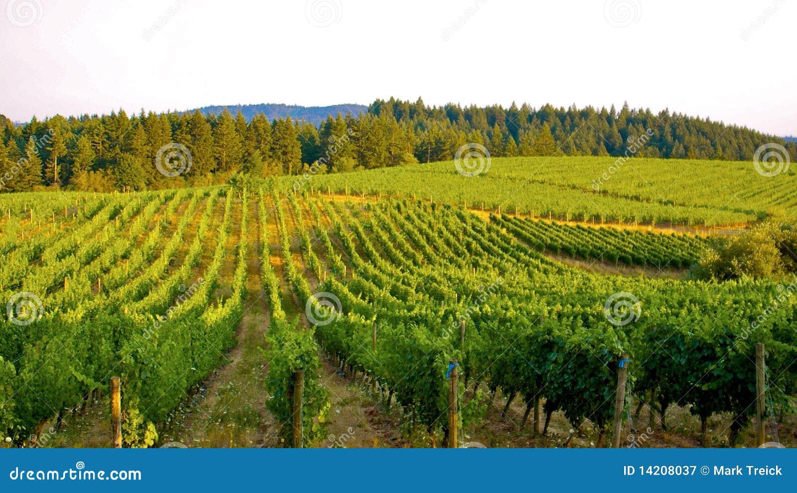 Sobre o vinhedo