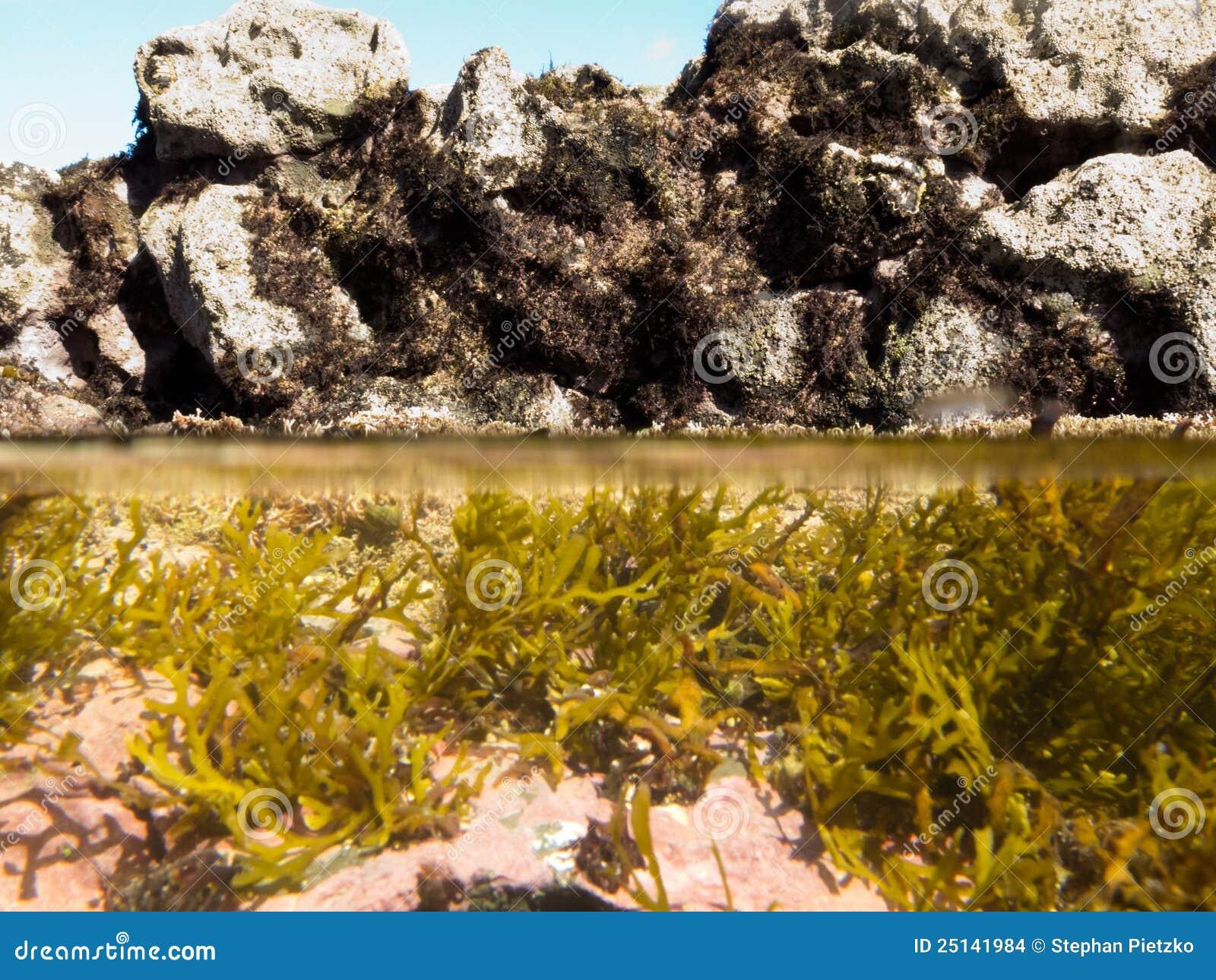 Sobre-sob o split disparado da água desobstruída na associação maré