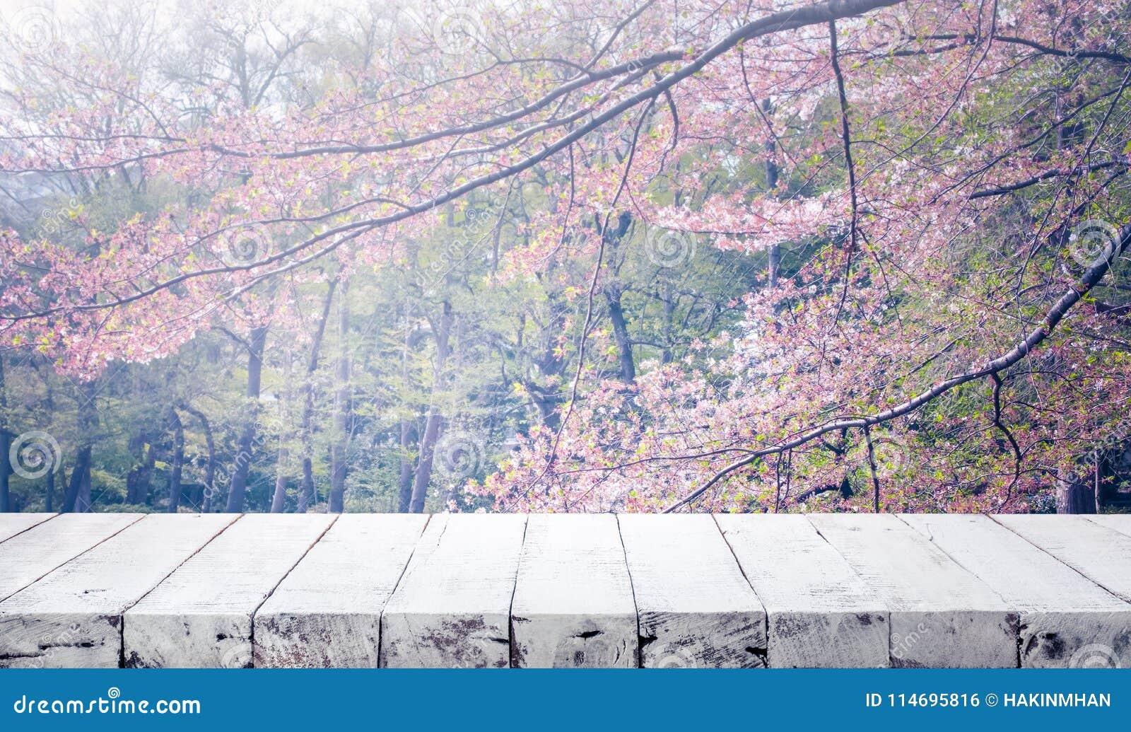 Sobremesa de madera en la flor de Sakura de la falta de definición en fondo del jardín Naturaleza