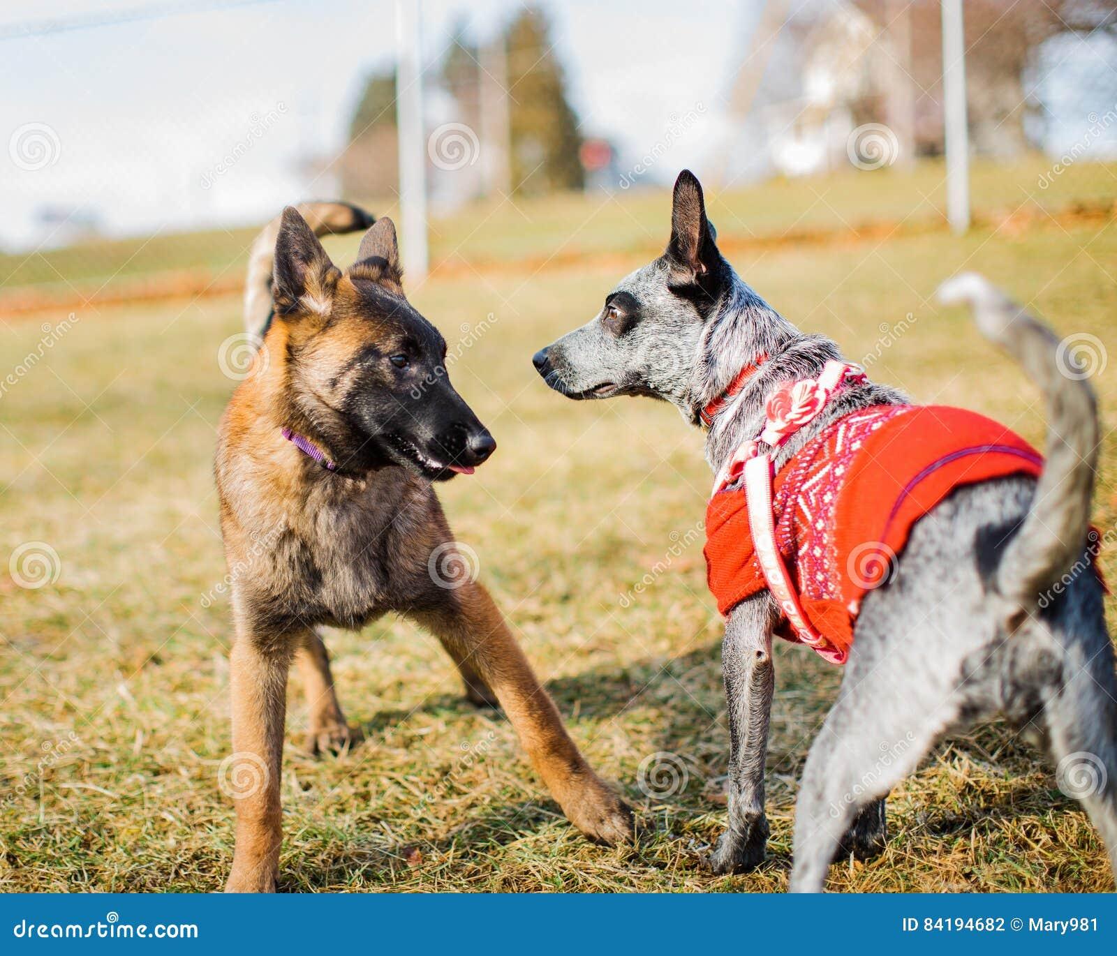 Socialización del perrito