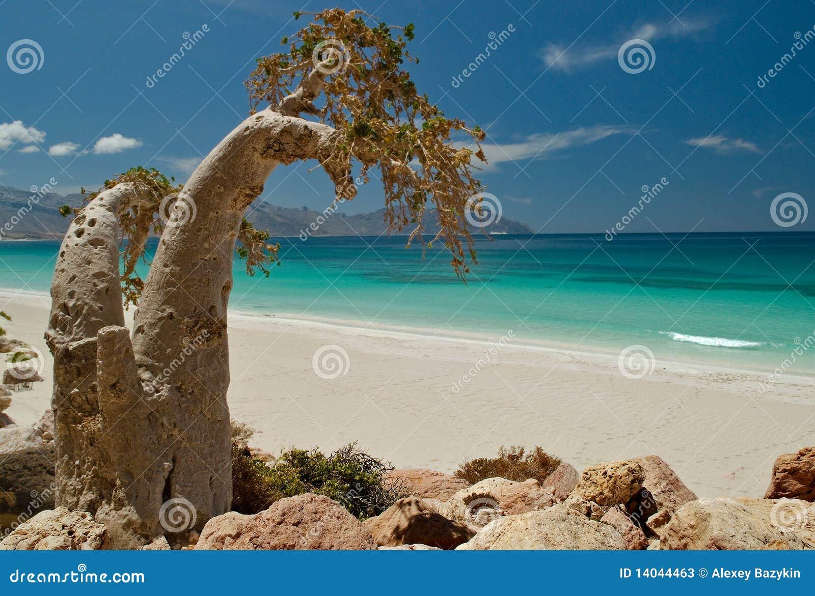 Socotra 288