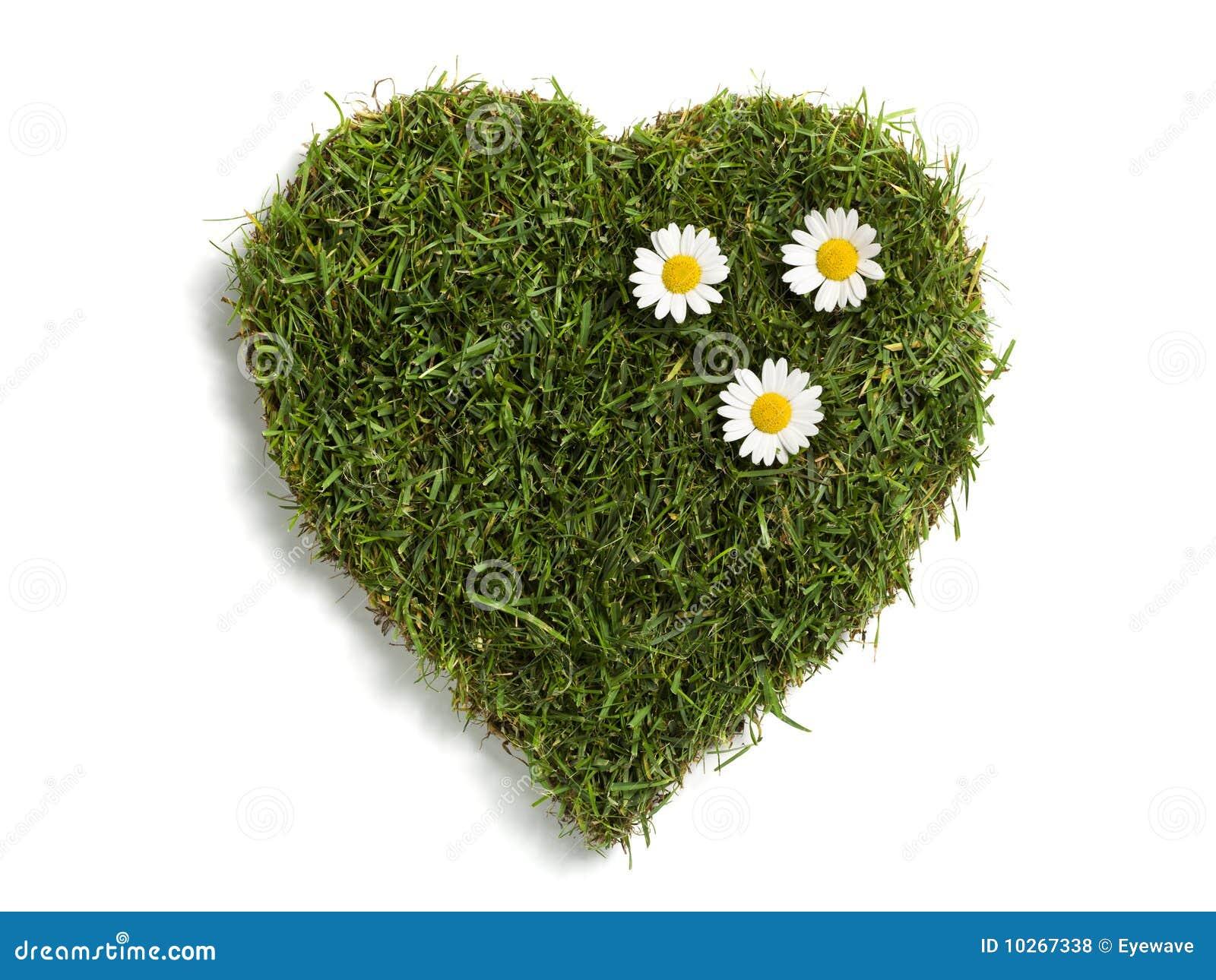 Sod dado forma coração do gramado com três margaridas