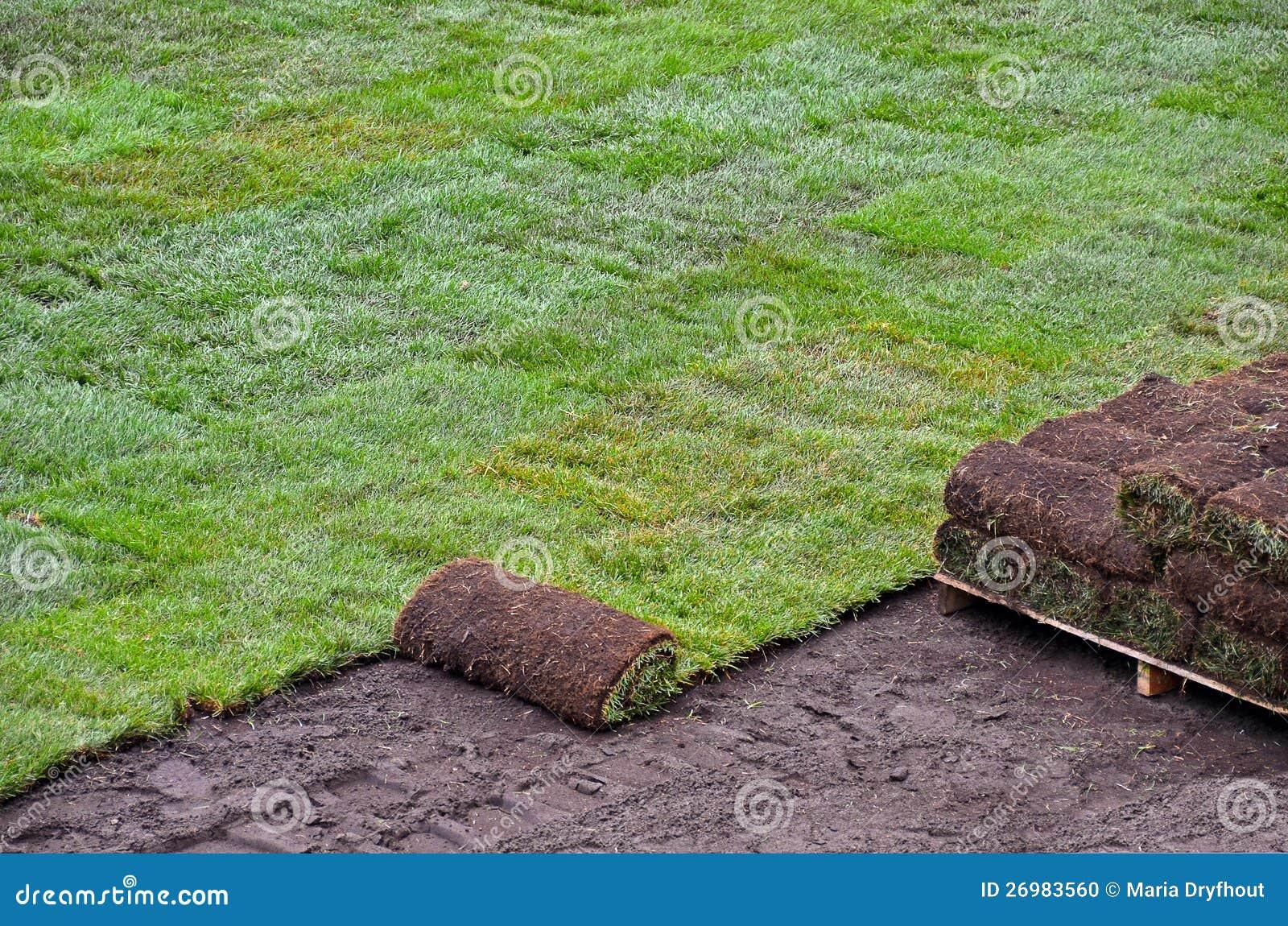 Sod rolado para o gramado