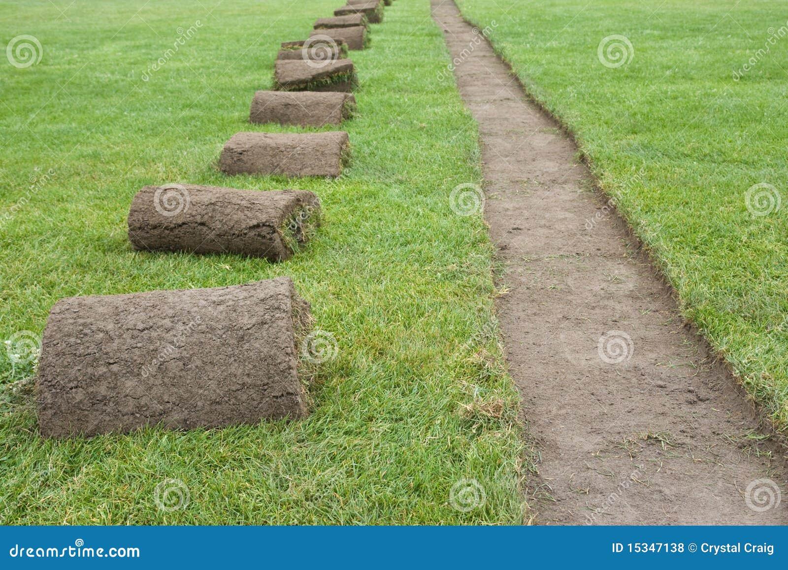 Sod rolls on grass field