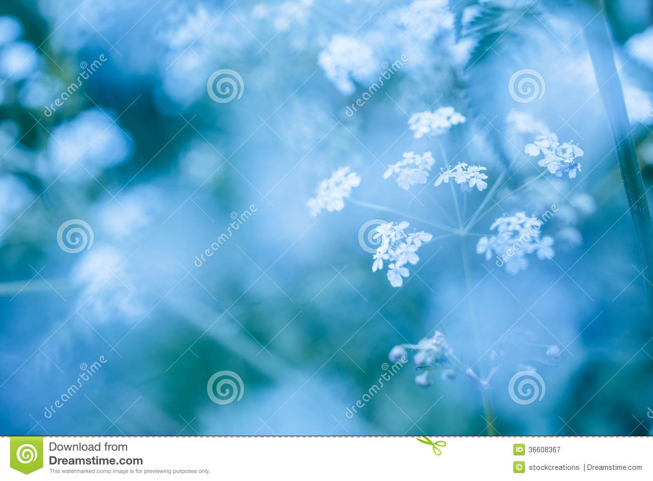 White And Blue Spring Flowers Frame - Free Stock Photos & Images ...