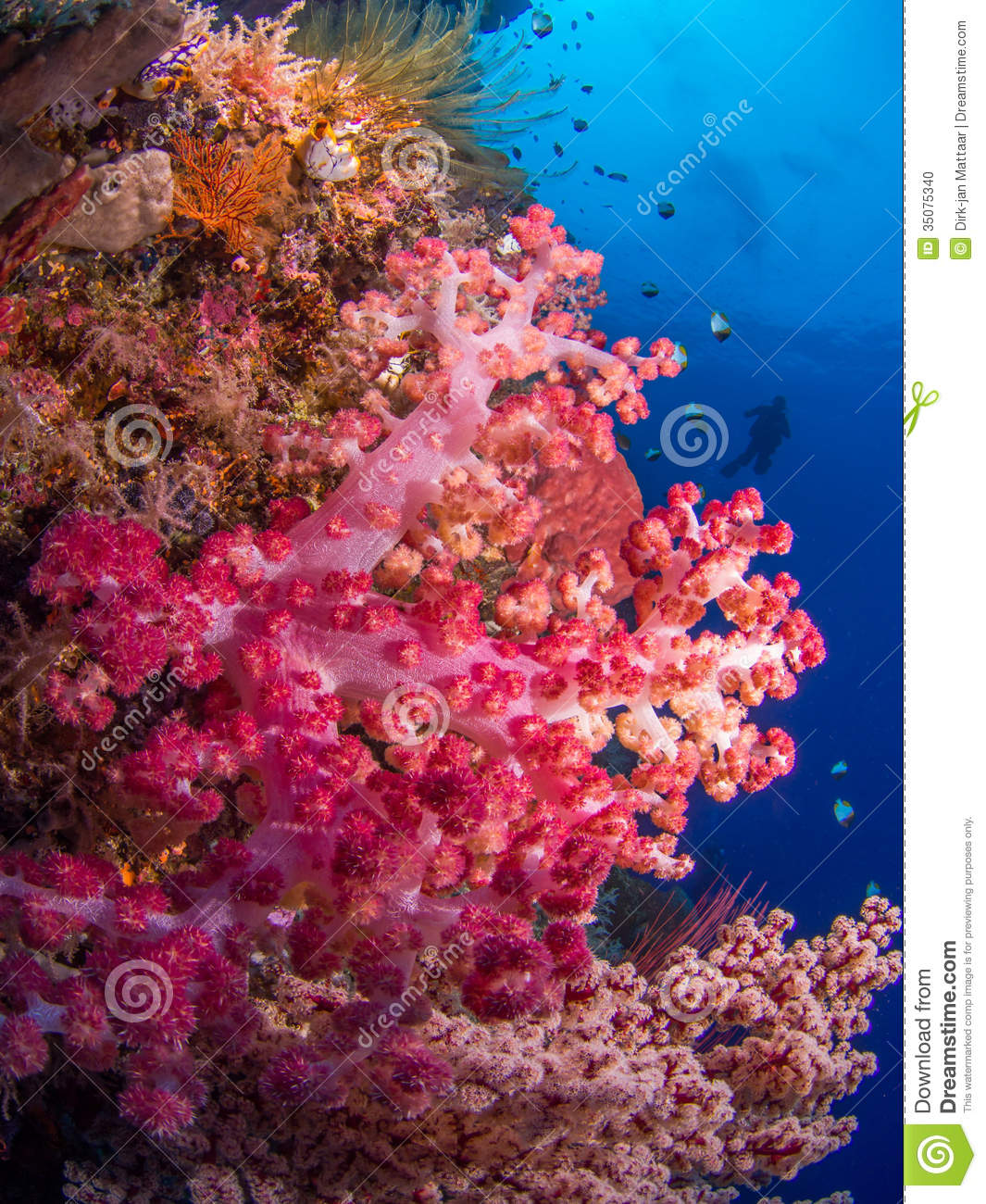 Soft corals stock photo. Image of scuba, blue, nature - 35075340