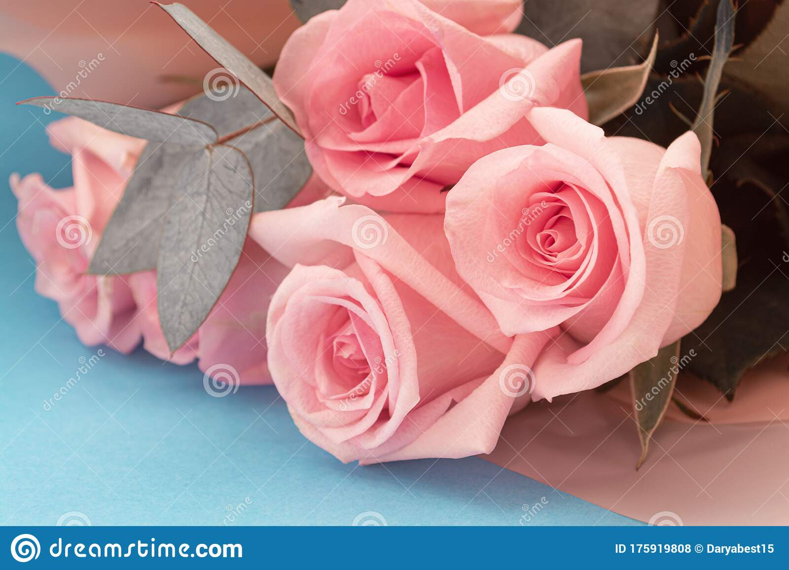 Soft Dusky Pink Color Roses Aesthetic Bouquet With Eucalyptus Brunches On Blue Background Stock Photo Image Of Aesthetic Blossom 175919808