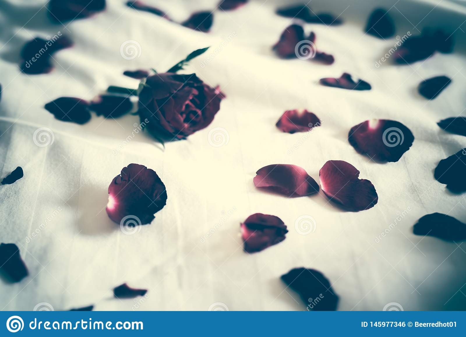 Soft focus of a Rose bouquet on a bed, heartbroken Valentines concept. Leave copy space empty to write text. filter tone dark Sad