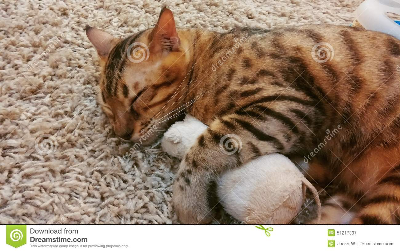 soft focus sleeping cat hugging toy mouse stock image