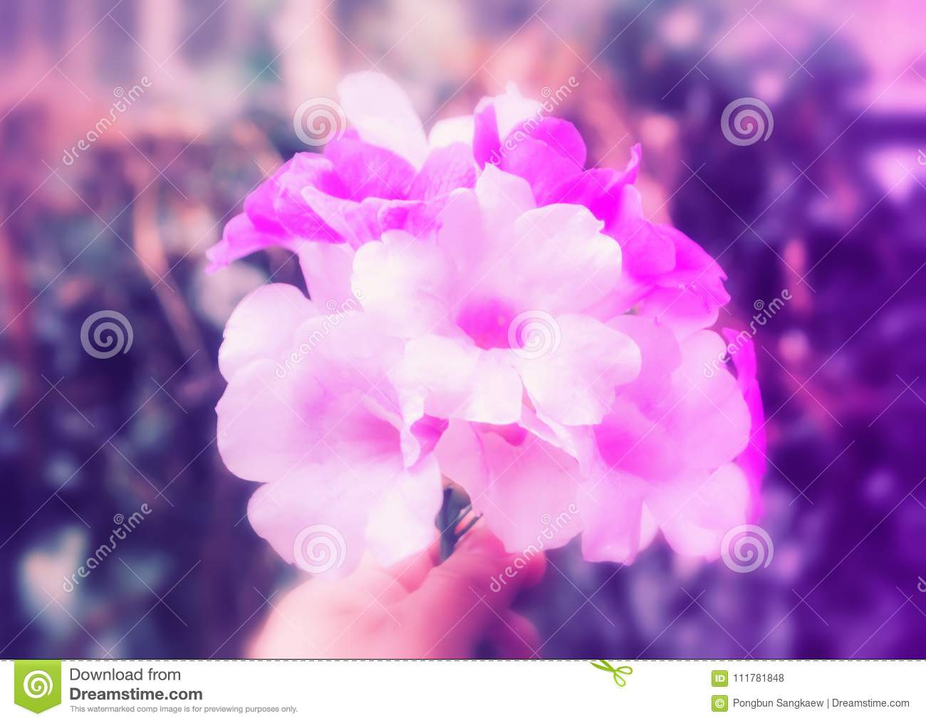 Soft focus violet flower fresh spring outdoor photo nature ba