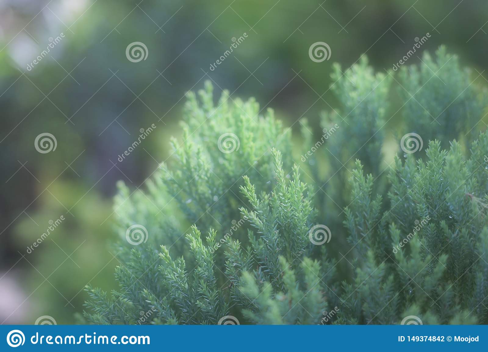 Soft mood of tropical green bush in the garden