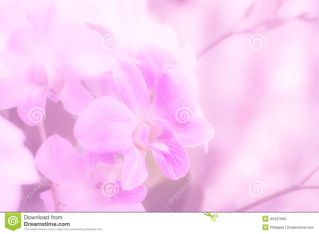 Soft Orchid Pastel Color For Background Stock Photo - Image: 45427693
