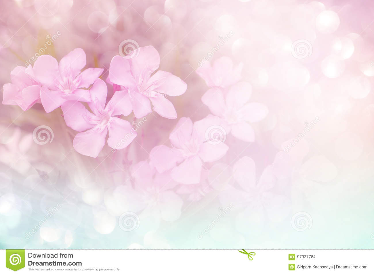 Soft Pink Flower Background With Bokeh In Vintage Tone Stock Photo