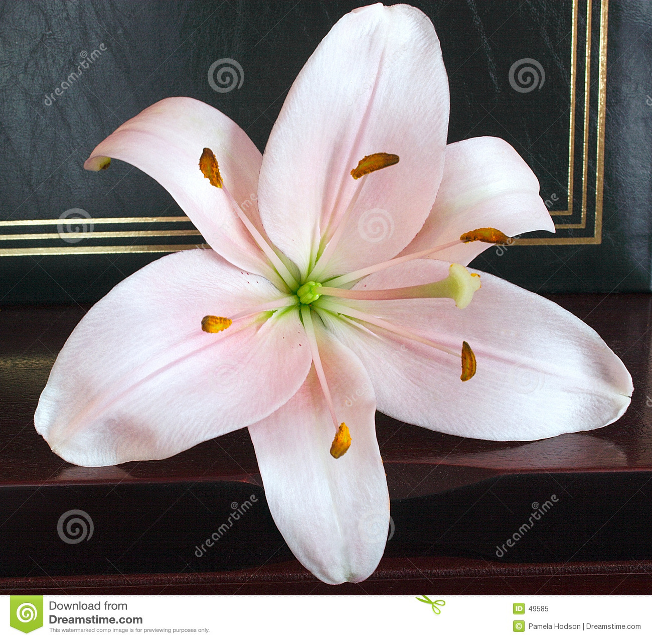 Soft Pink Lily Stock Image Image Of Gardens Lily Pink 49585