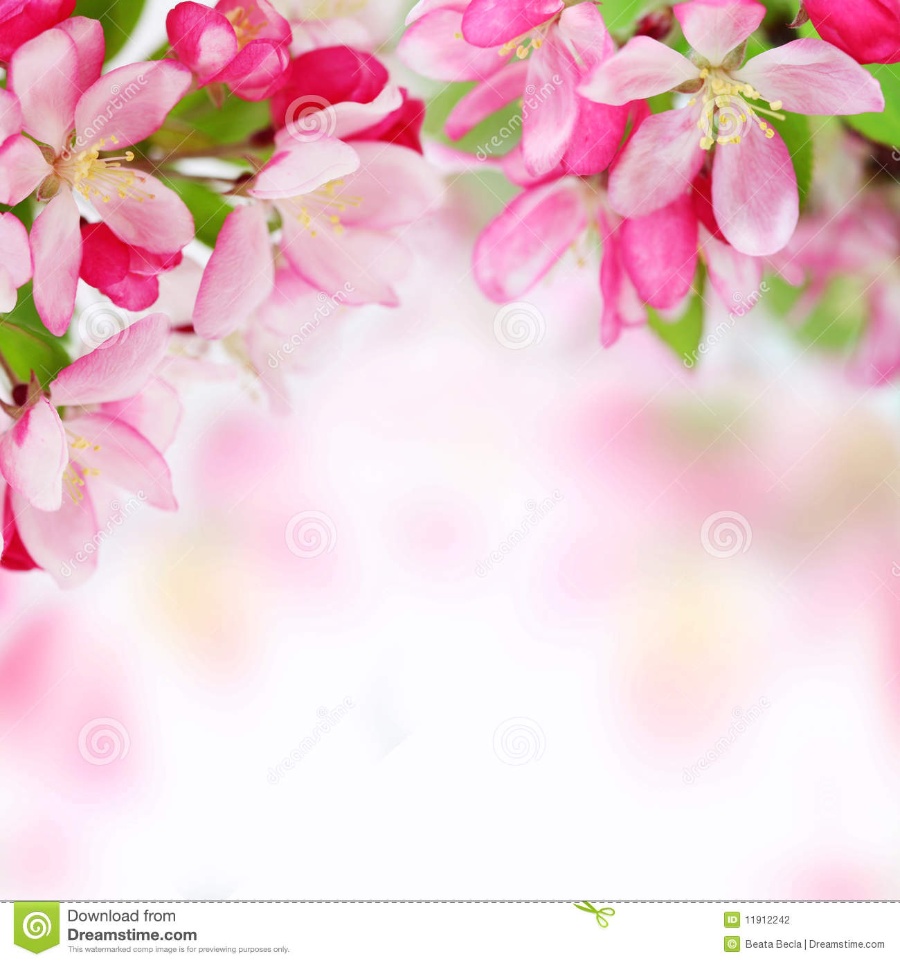 Background Pictures Of Flowers apple flowers background