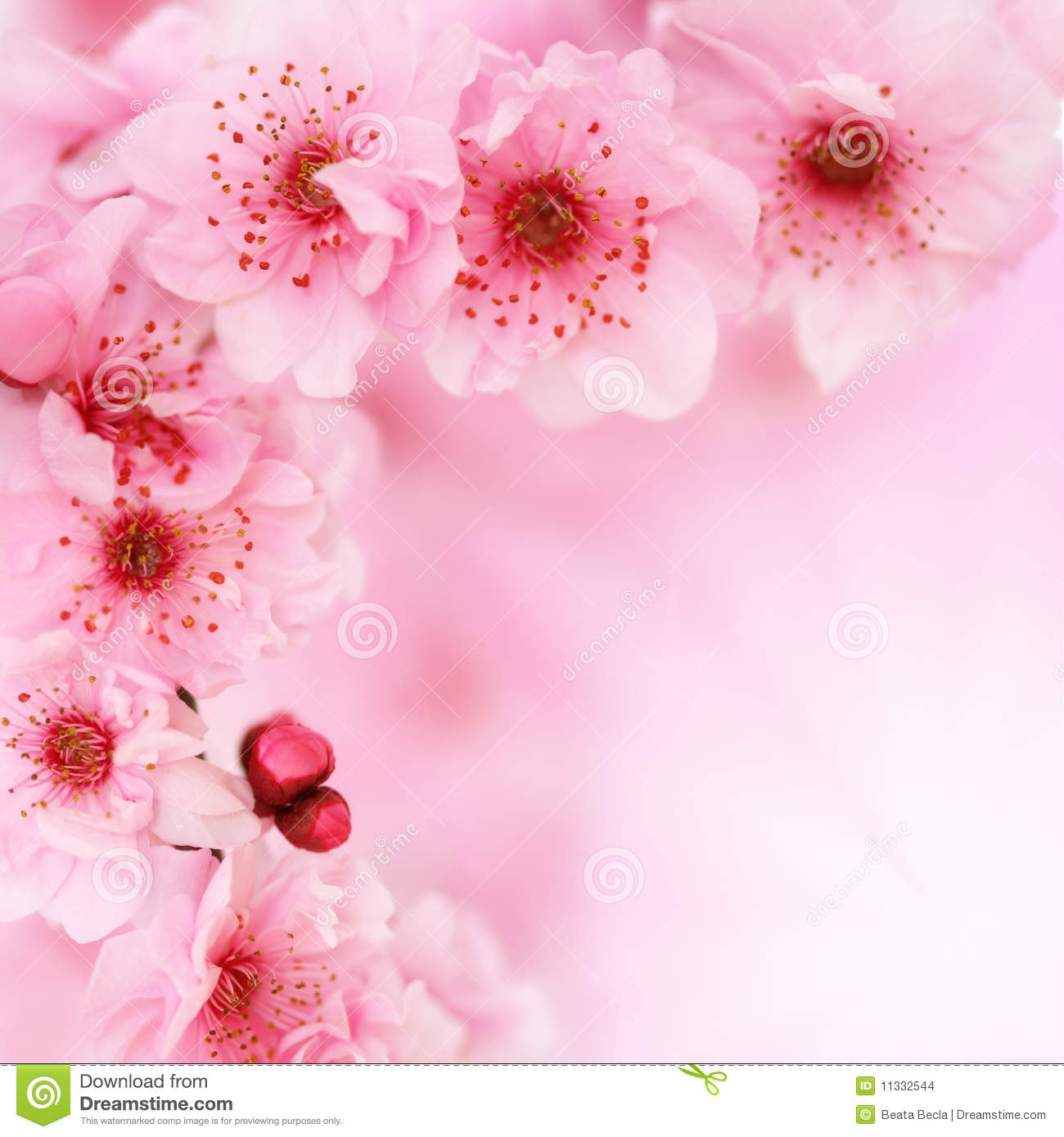 Soft Spring Apple Flowers Background Stock Photo Image Of Bloom