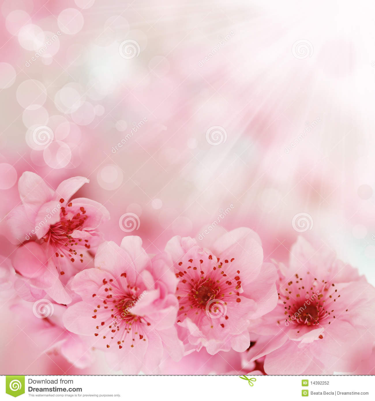 soft spring cherry flowers background stock photography cherry blossom clip art with birds cherry blossoms clip art black and white