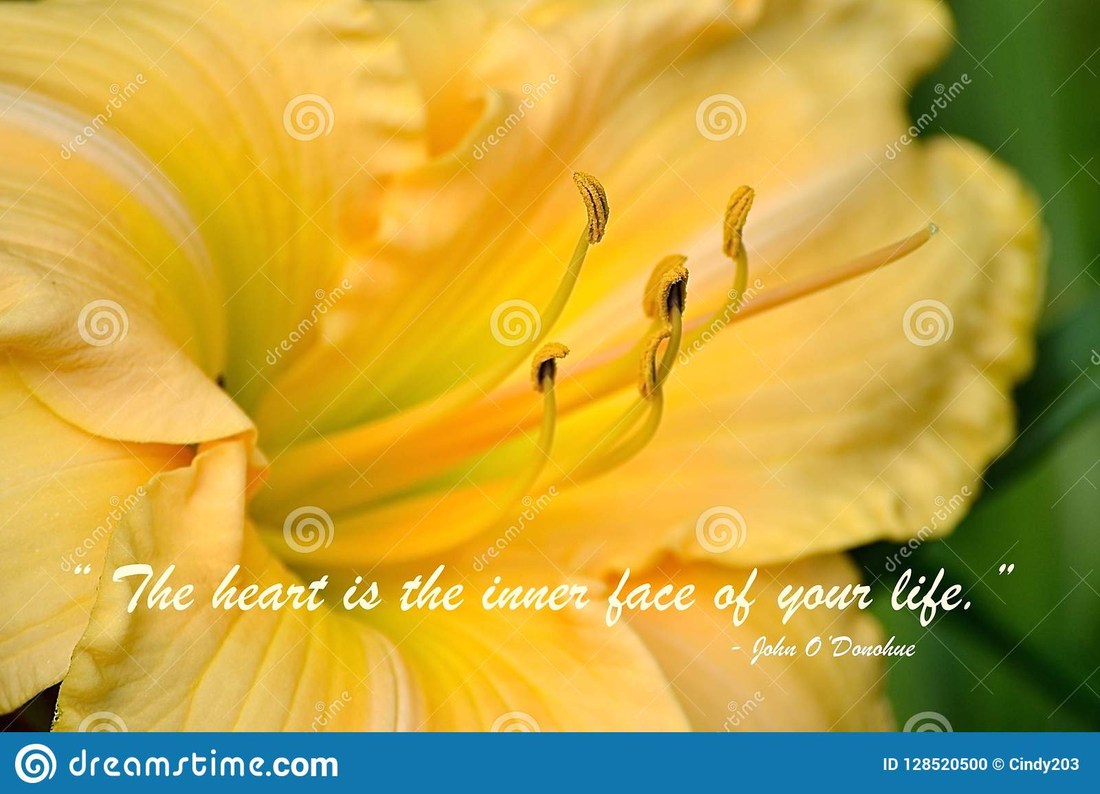 Inspirational Quote On A Beautiful Yellow Lily Stock Photo