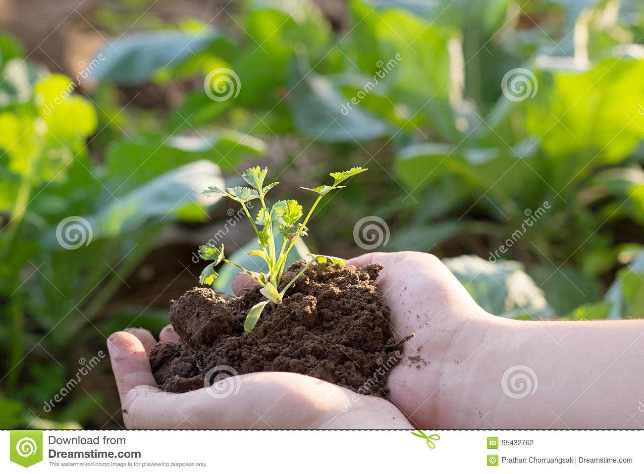 Soil cultivated dirt, earth, ground, agriculture land background.