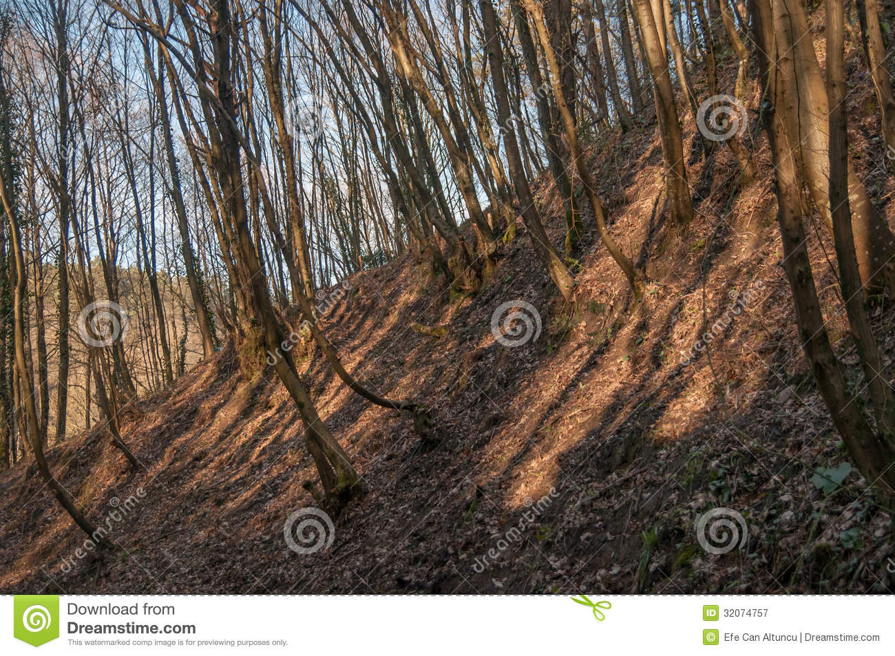 Soil erosion forest royalty free stock photography image for Soil erosion prevention