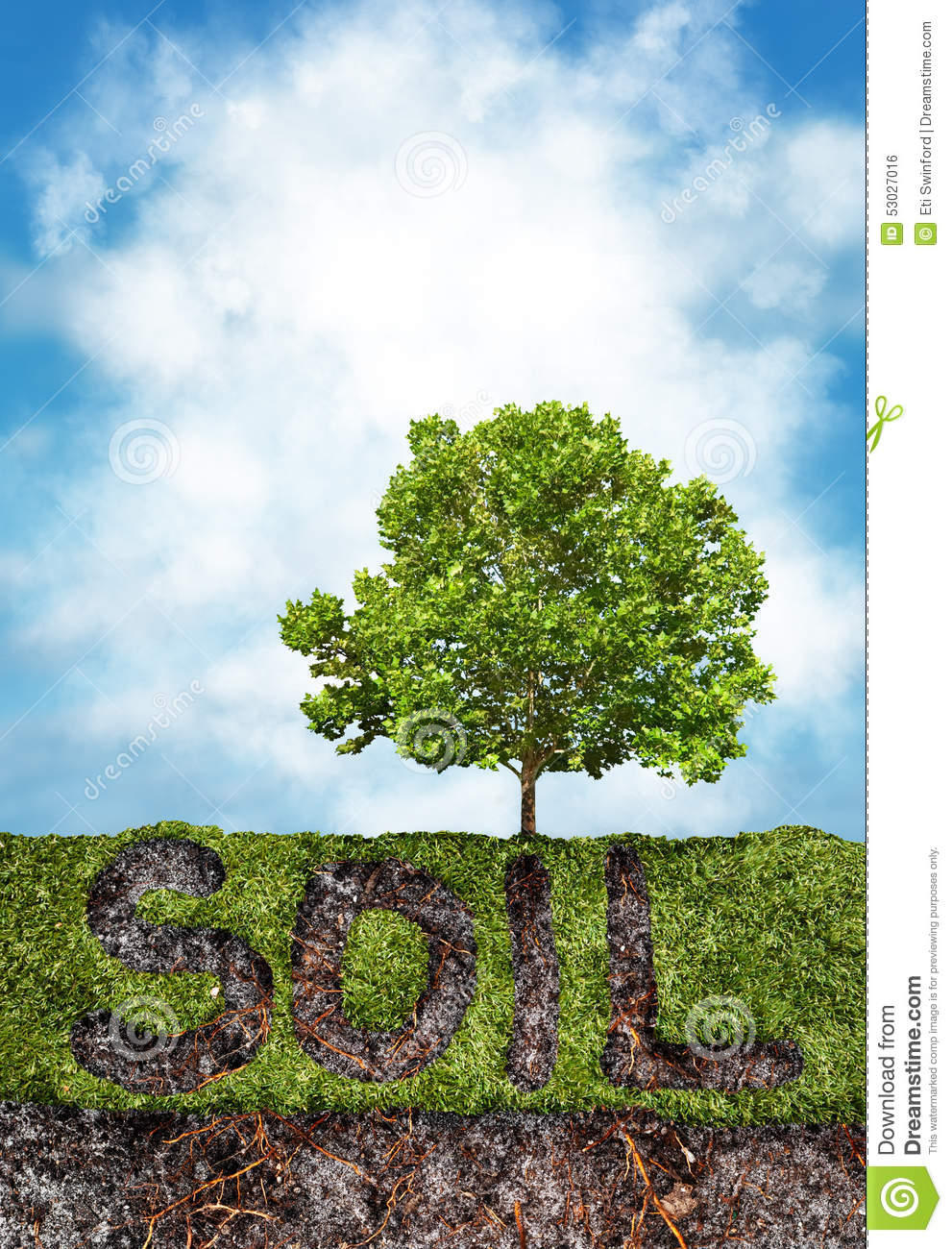 Soil and grass under tree