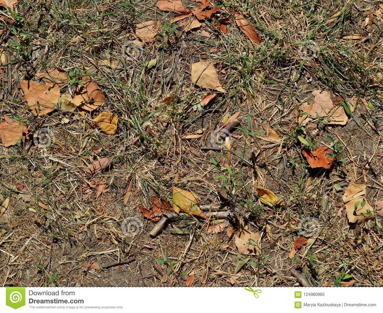 Soil With Half-dried Grass, Small Branch Fragments And