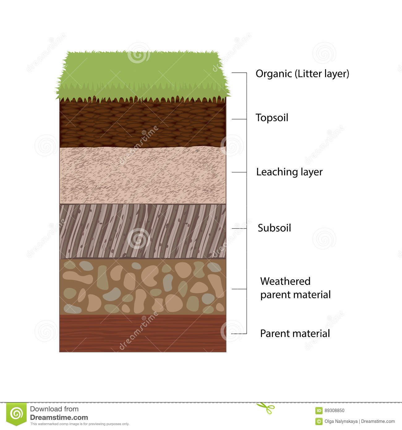 Soil horizons and layers stock vector illustration of for What are the different layers of soil