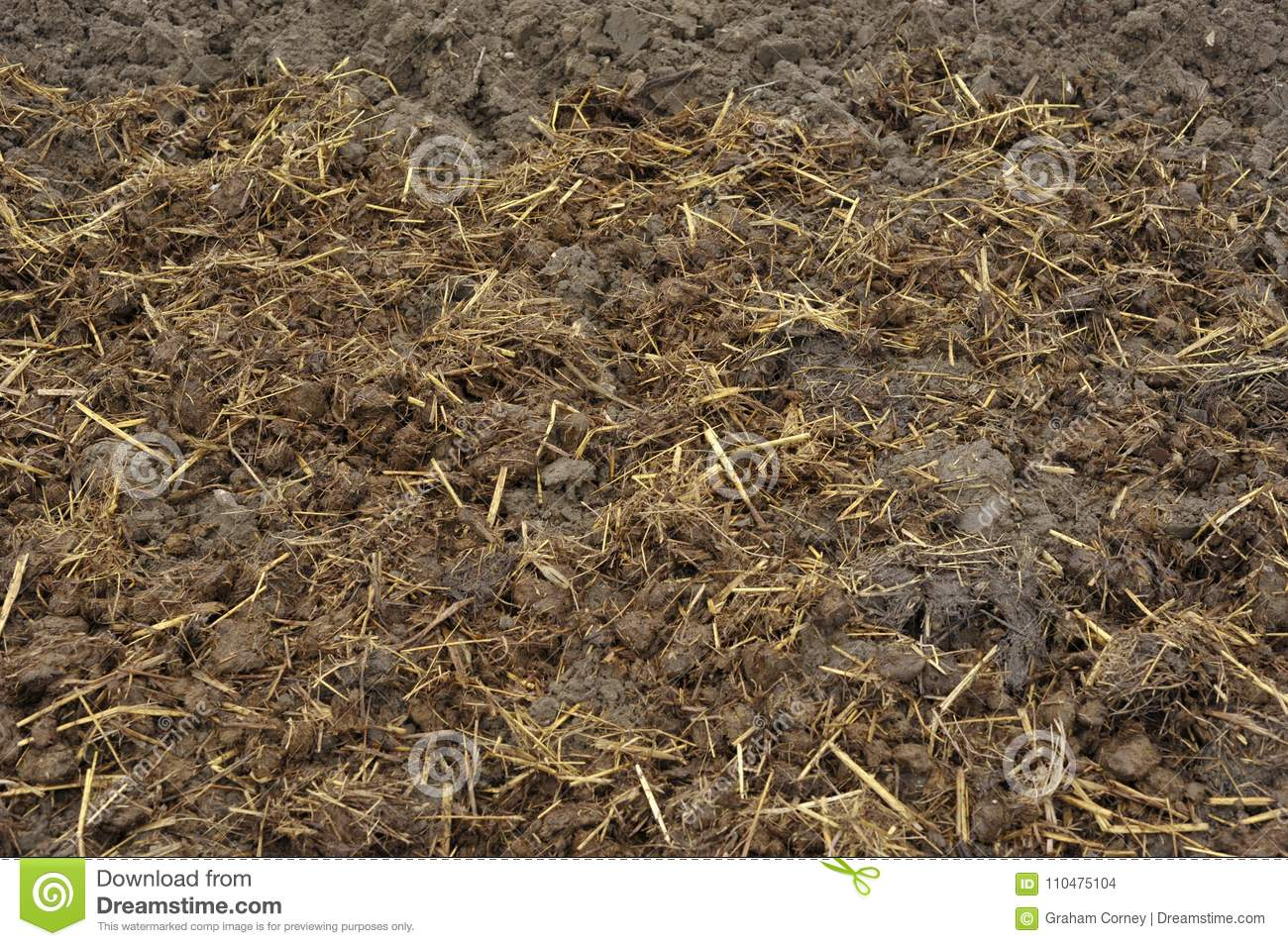 Download Soil With Horse Manure Covering Stock Photo   Image Of Manure,  Organic: 110475104