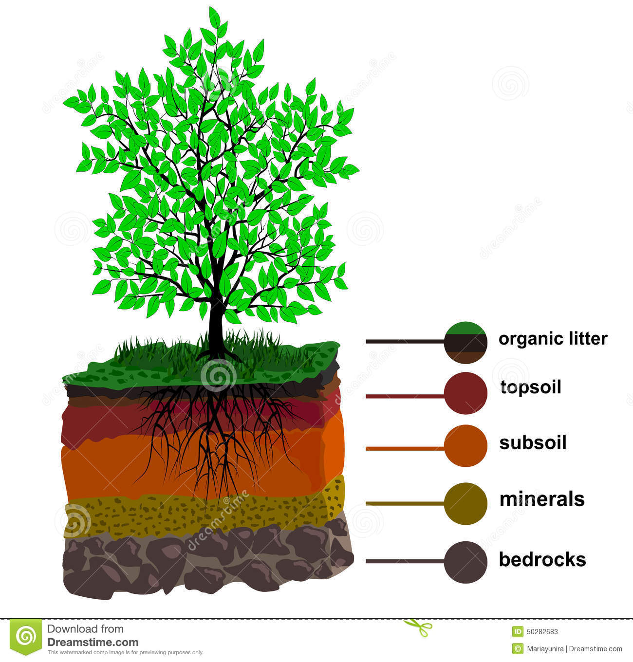 Soil layer and tree stock vector illustration of vector 50282683 soil layer and tree pooptronica Images