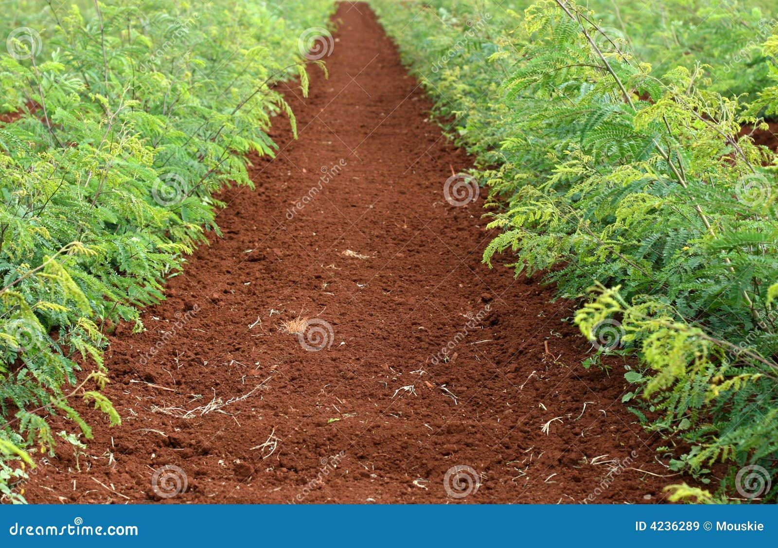Soil & Plants