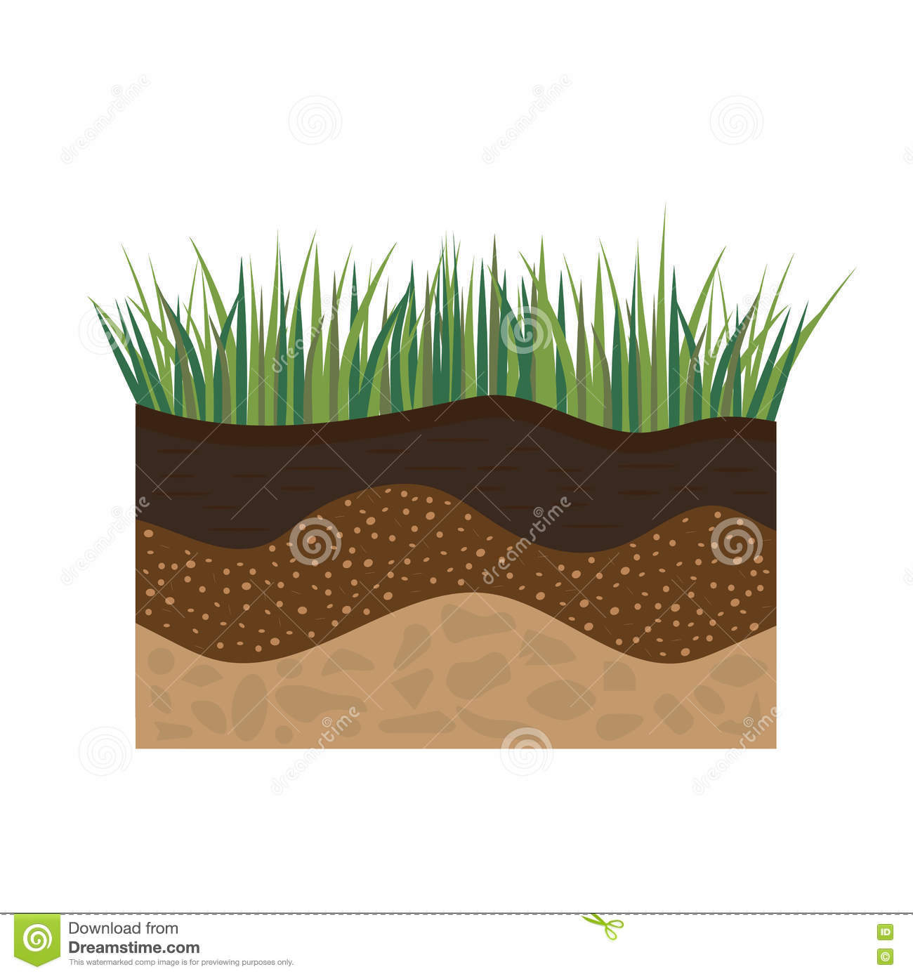 Soil profile with grass stock vector. Illustration of ...