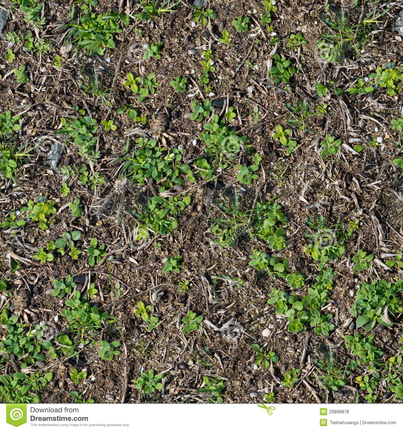 Soil With The Sprouted Grass Texture Seamless. Royalty Free Stock ...