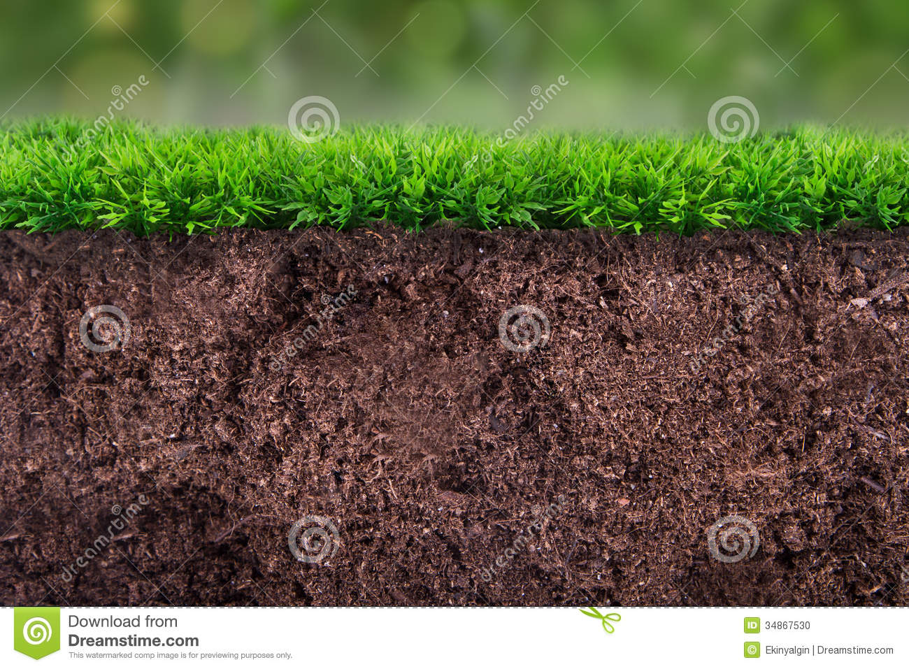Soil under grass stock photo image of plant detail for Lawn topsoil