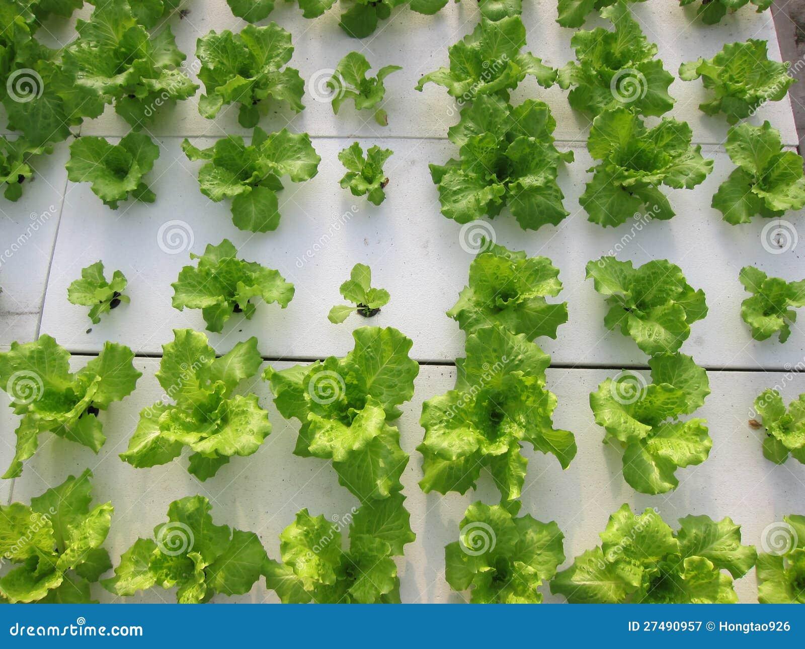 Soilless Agricultureï ¼