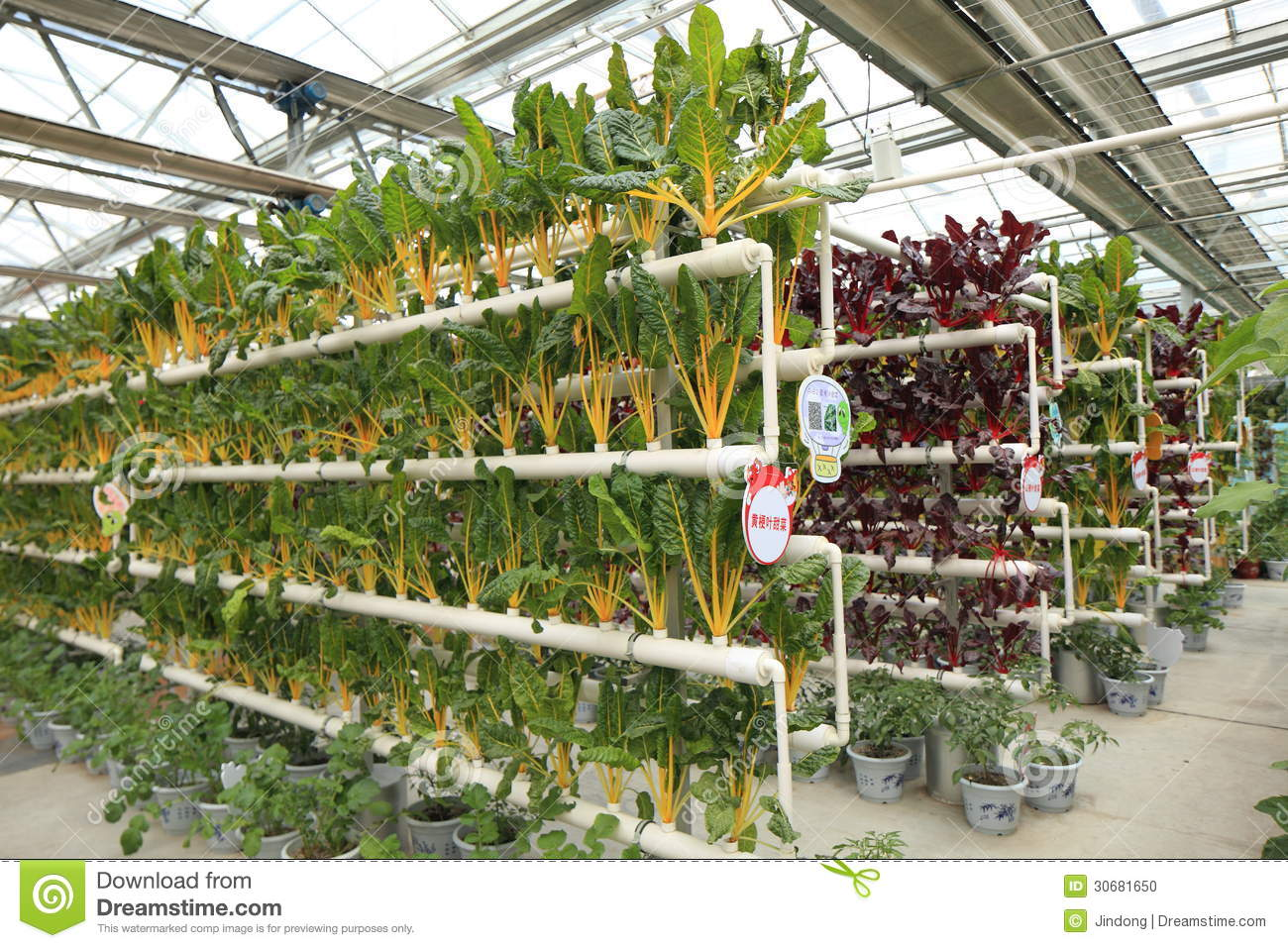 Soilless Cultivation Vegetables Stock Photo Image 30681650