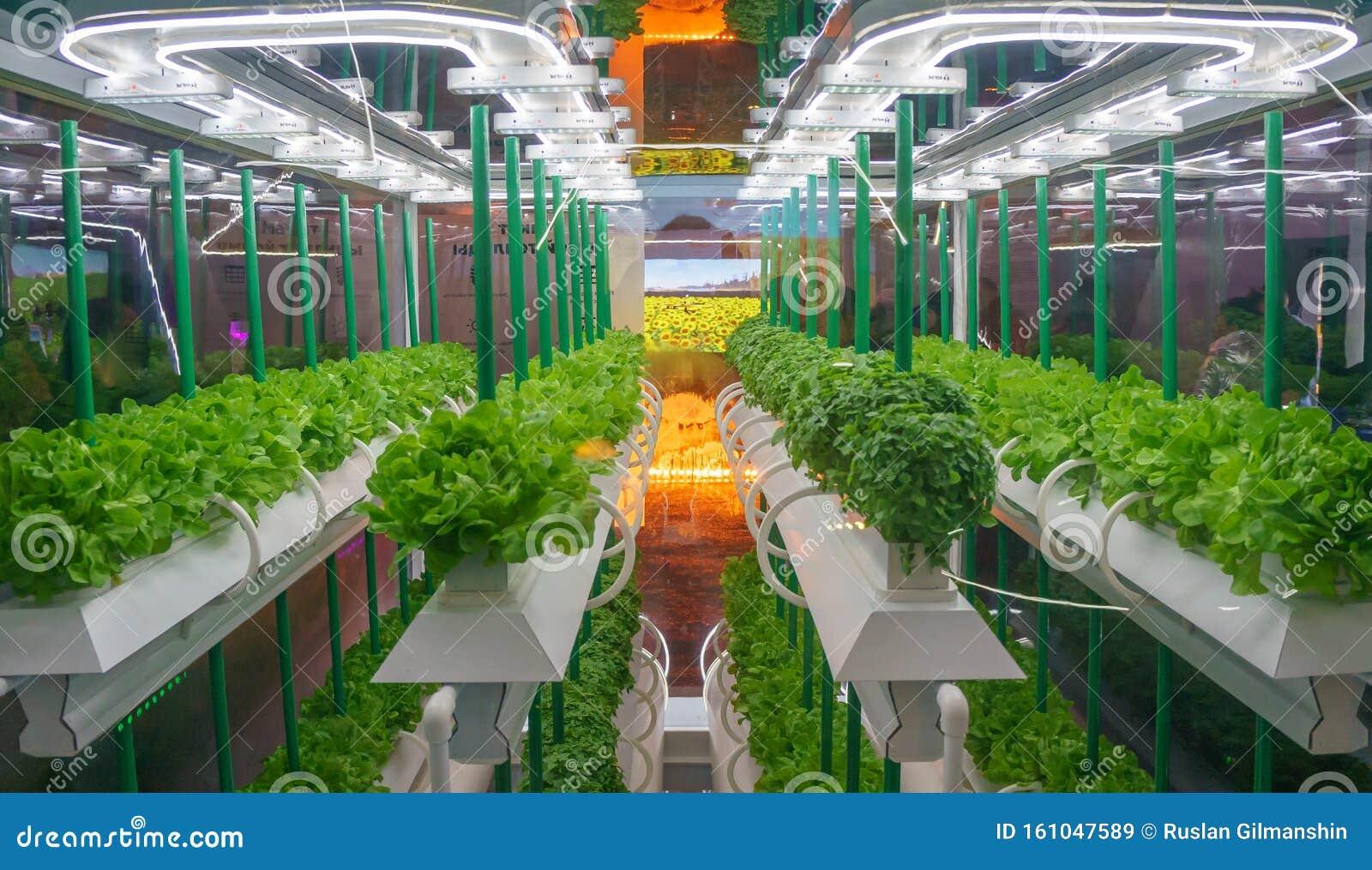 Soilless Culture Of Vegetables Under Artificial Light Organic