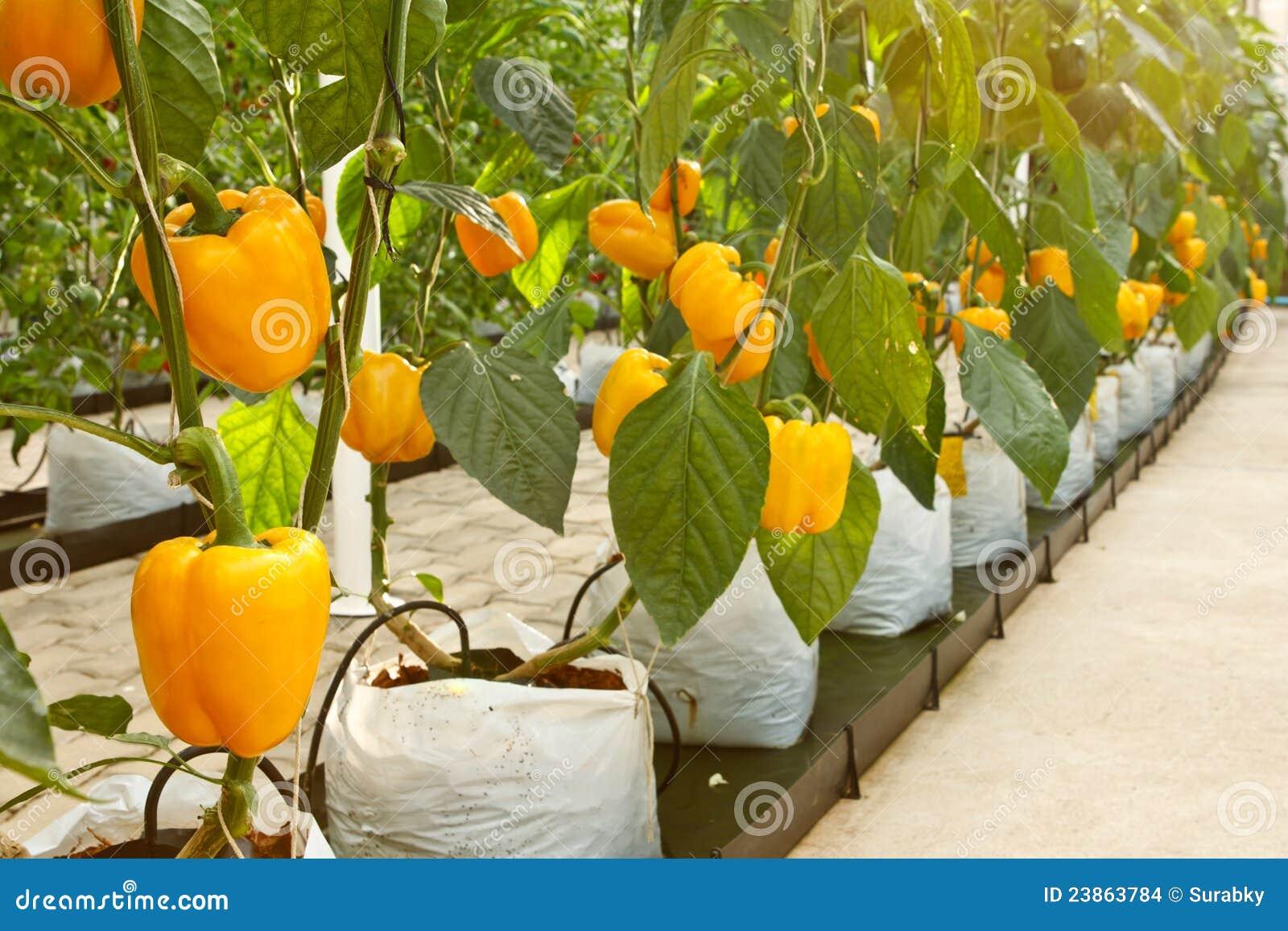Soilless plantation technique stock images image 23863784 for Soil less farming
