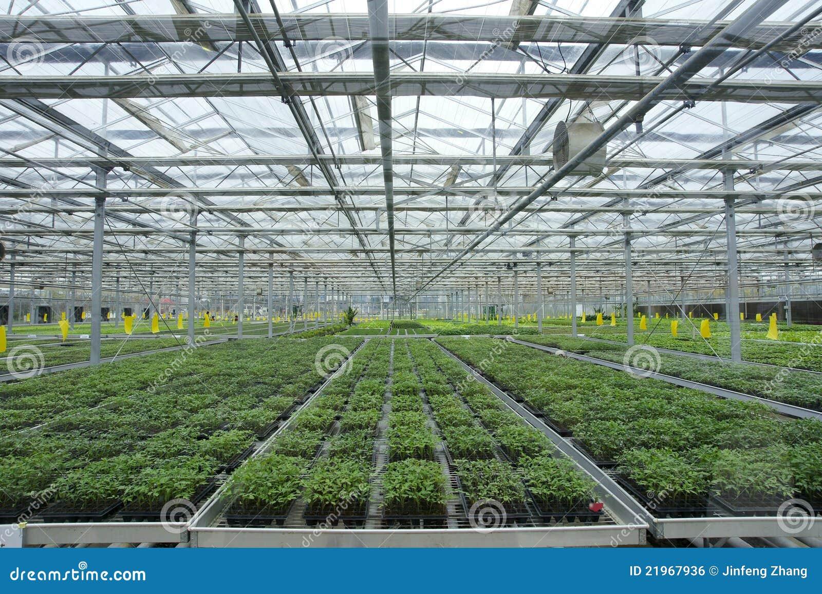 Soilless växthus