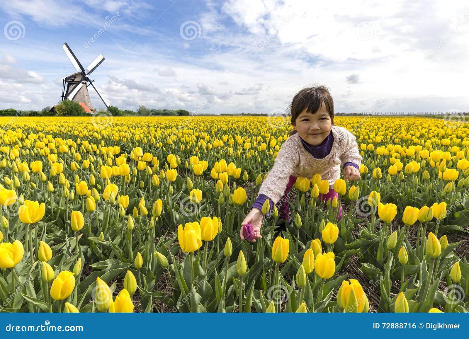 Soins de la tulipe rouge seule parmi les autres