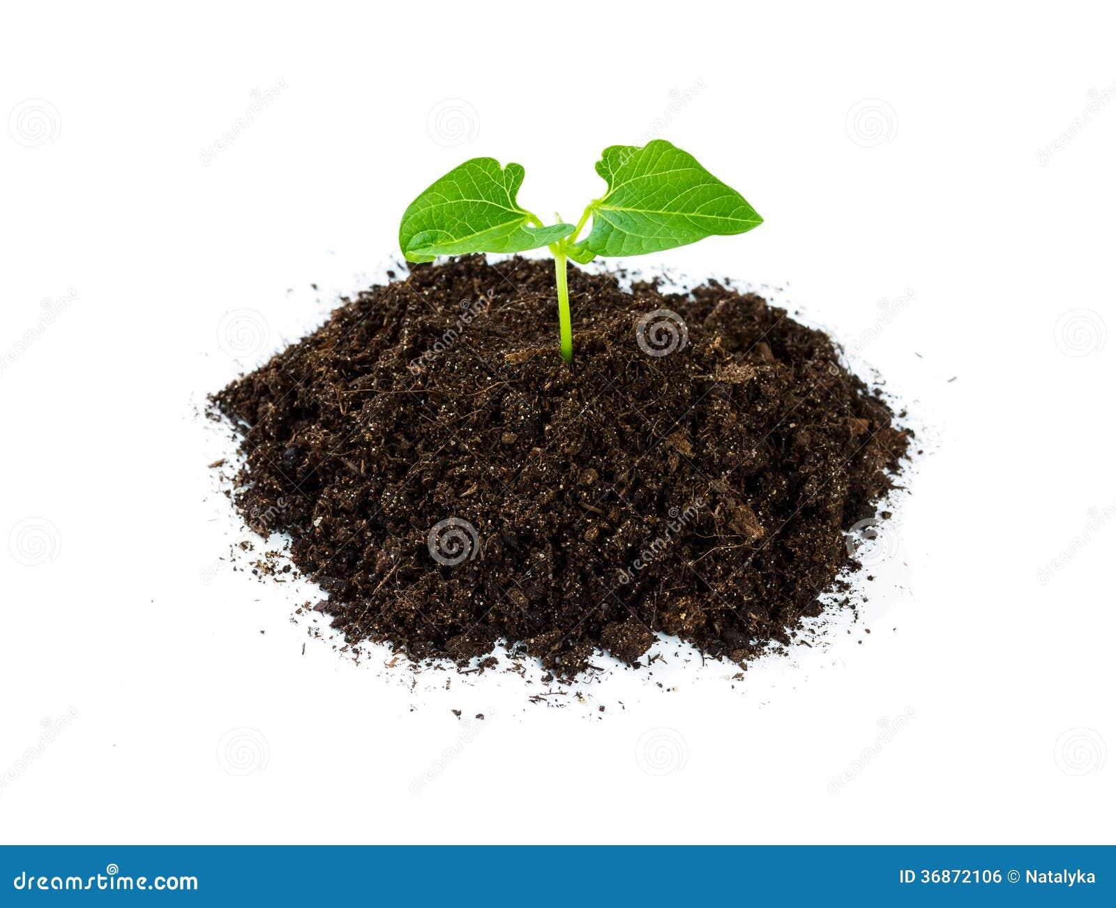 sol de tas avec une pousse de plante verte photo stock image 36872106. Black Bedroom Furniture Sets. Home Design Ideas