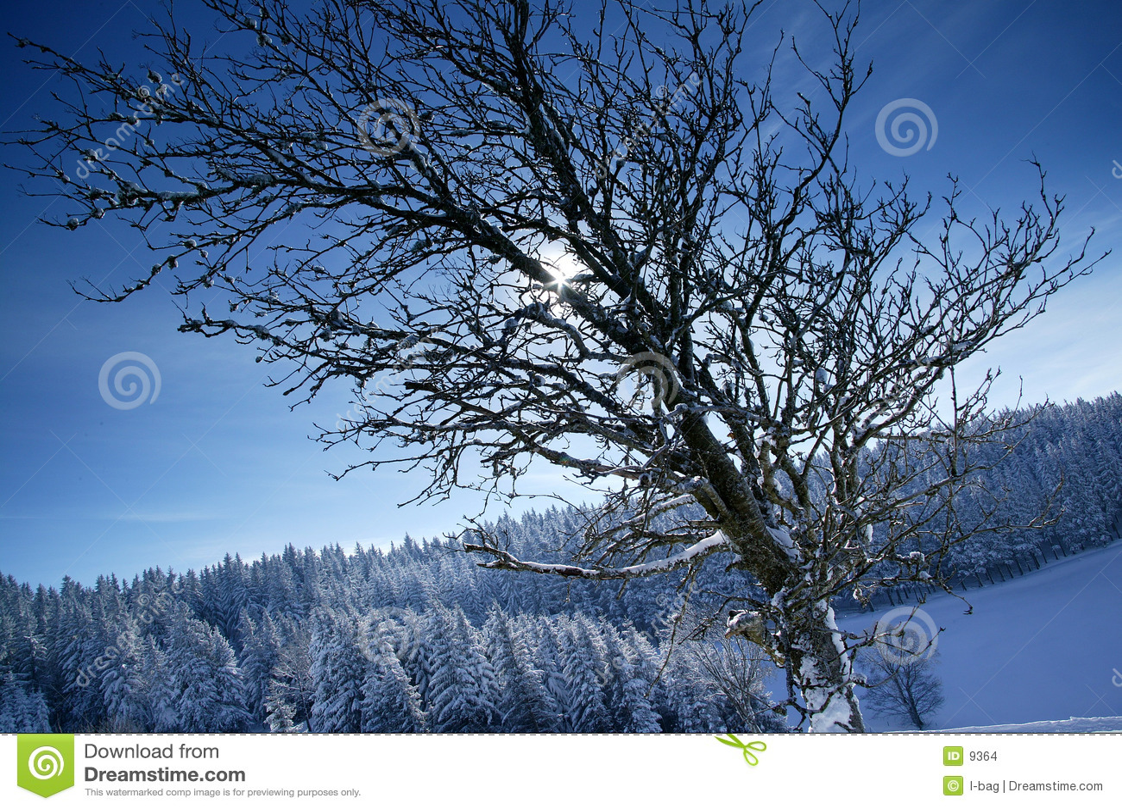 Sol del invierno detrás de brenches